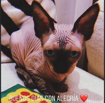 La famiglia di CR7 si allarga: arriva un gatto da oltre 2mila euro
