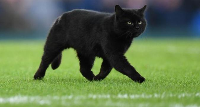 Premier, un gatto fa irruzione in campo: gara interrotta