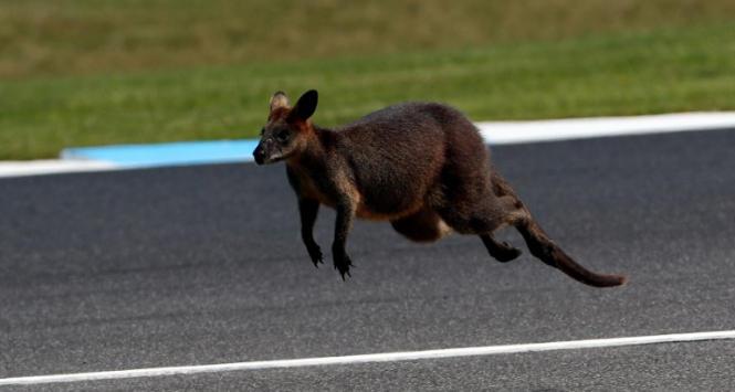MotoGp, Vinales trionfa in Australia. Incidente per Marquez, Rossi sesto