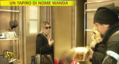 "Il Tapiro d'Oro a Wanda Nara: ""Icardi? Si rinnova, si rinnova"""