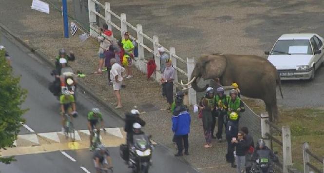 Elefante al Tour, Foto da Twitter