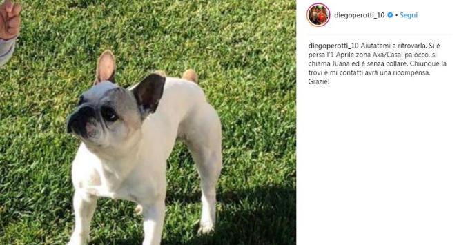 Roma, Perotti ha smarrito il suo cane: appello su Instagram per ritrovarlo
