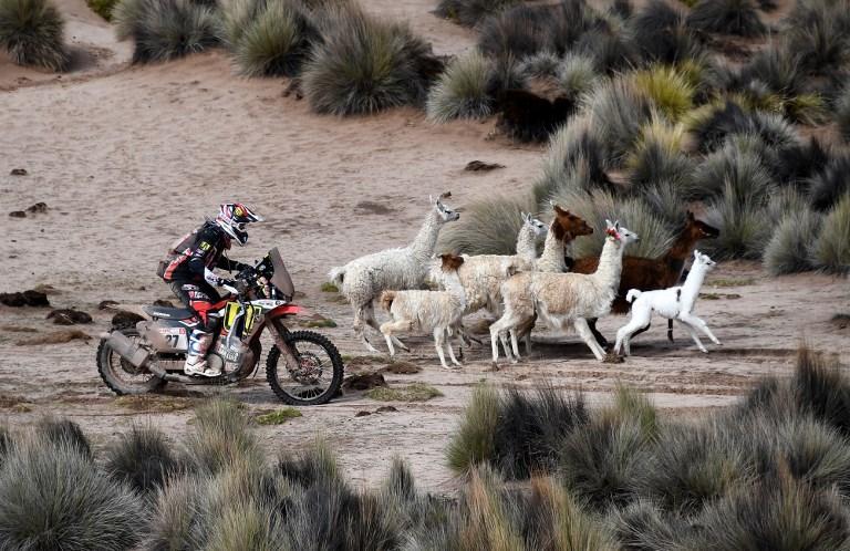 Diego Martin Duplessis dribbla anche la fauna locale di La Paz alla Dakar (13 genanio)