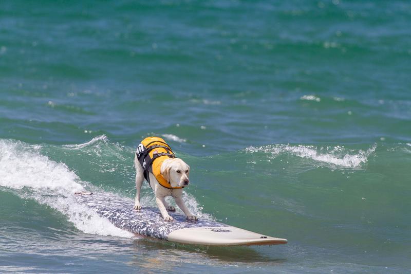 Surf, che passione