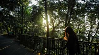 La promessa del Governo: 50 milioni di alberi per le città