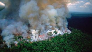 Amazzonia:una lotta alla deforestazione