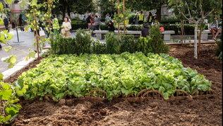 """""""Istinto vegetale"""", colture e cultura negli orti 2.0"""