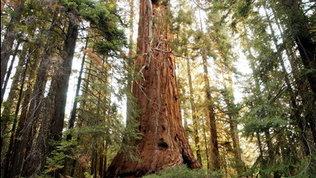 Foreste, non tutti sanno chepotrebbero assorbire il doppio dell'anidride carbonica