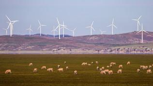 Un futuro a zero emissioni: l'impegno green delle aziende