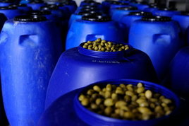 Plastica ecologica dai noccioli d'oliva