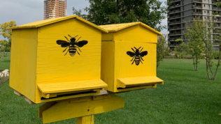 Alveari Urbani: Milano diventa città a prova di api